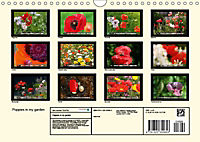 Poppies in my garden (Wall Calendar 2019 DIN A4 Landscape) - Produktdetailbild 13