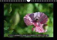 Poppies in my garden (Wall Calendar 2019 DIN A4 Landscape) - Produktdetailbild 12