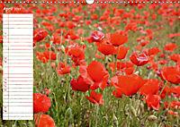Poppy Fields of Provence (Wall Calendar 2019 DIN A3 Landscape) - Produktdetailbild 4