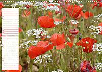 Poppy Fields of Provence (Wall Calendar 2019 DIN A3 Landscape) - Produktdetailbild 1