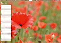 Poppy Fields of Provence (Wall Calendar 2019 DIN A3 Landscape) - Produktdetailbild 6