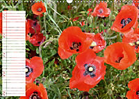 Poppy Fields of Provence (Wall Calendar 2019 DIN A3 Landscape) - Produktdetailbild 3