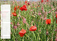 Poppy Fields of Provence (Wall Calendar 2019 DIN A3 Landscape) - Produktdetailbild 9