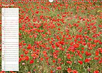 Poppy Fields of Provence (Wall Calendar 2019 DIN A3 Landscape) - Produktdetailbild 8