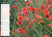 Poppy Fields of Provence (Wall Calendar 2019 DIN A3 Landscape) - Produktdetailbild 10