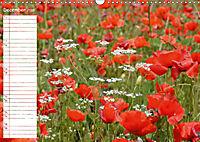 Poppy Fields of Provence (Wall Calendar 2019 DIN A3 Landscape) - Produktdetailbild 12
