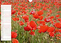 Poppy Fields of Provence (Wall Calendar 2019 DIN A4 Landscape) - Produktdetailbild 4