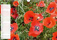 Poppy Fields of Provence (Wall Calendar 2019 DIN A4 Landscape) - Produktdetailbild 3