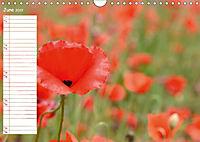 Poppy Fields of Provence (Wall Calendar 2019 DIN A4 Landscape) - Produktdetailbild 6