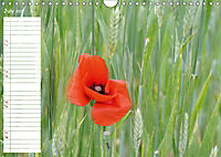 Poppy Fields of Provence (Wall Calendar 2019 DIN A4 Landscape) - Produktdetailbild 7