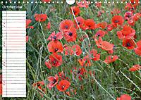 Poppy Fields of Provence (Wall Calendar 2019 DIN A4 Landscape) - Produktdetailbild 10