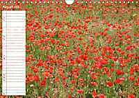 Poppy Fields of Provence (Wall Calendar 2019 DIN A4 Landscape) - Produktdetailbild 8