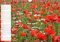 Poppy Fields of Provence (Wall Calendar 2019 DIN A4 Landscape) - Produktdetailbild 12