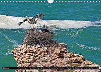 Portugal - Die Küste vom Cabo da Roca zur Ria Formosa (Wandkalender 2019 DIN A4 quer) - Produktdetailbild 5