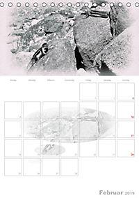 Possierliche Atlashörnchen (Tischkalender 2019 DIN A5 hoch) - Produktdetailbild 2