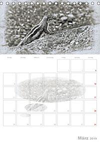 Possierliche Atlashörnchen (Tischkalender 2019 DIN A5 hoch) - Produktdetailbild 3