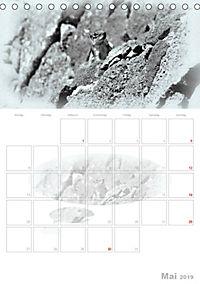 Possierliche Atlashörnchen (Tischkalender 2019 DIN A5 hoch) - Produktdetailbild 5
