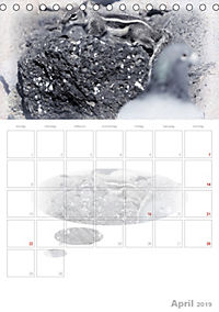 Possierliche Atlashörnchen (Tischkalender 2019 DIN A5 hoch) - Produktdetailbild 4