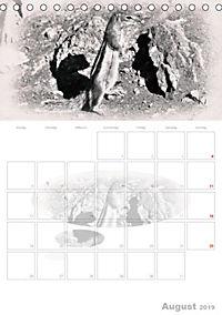 Possierliche Atlashörnchen (Tischkalender 2019 DIN A5 hoch) - Produktdetailbild 8