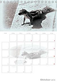 Possierliche Atlashörnchen (Tischkalender 2019 DIN A5 hoch) - Produktdetailbild 10
