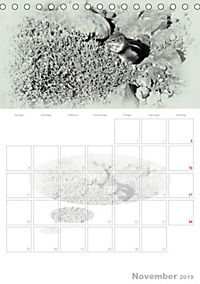 Possierliche Atlashörnchen (Tischkalender 2019 DIN A5 hoch) - Produktdetailbild 11
