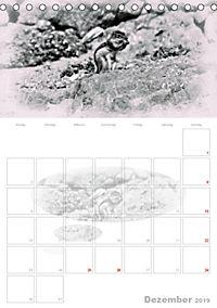 Possierliche Atlashörnchen (Tischkalender 2019 DIN A5 hoch) - Produktdetailbild 12