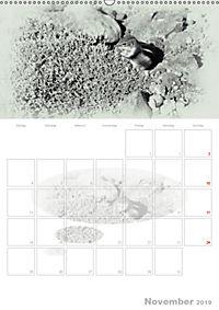 Possierliche Atlashörnchen (Wandkalender 2019 DIN A2 hoch) - Produktdetailbild 11
