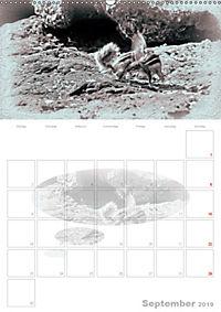 Possierliche Atlashörnchen (Wandkalender 2019 DIN A2 hoch) - Produktdetailbild 9