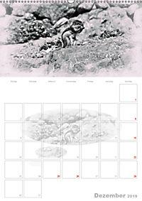 Possierliche Atlashörnchen (Wandkalender 2019 DIN A2 hoch) - Produktdetailbild 12