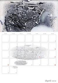 Possierliche Atlashörnchen (Wandkalender 2019 DIN A2 hoch) - Produktdetailbild 4