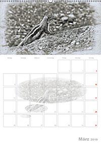 Possierliche Atlashörnchen (Wandkalender 2019 DIN A2 hoch) - Produktdetailbild 3