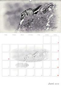 Possierliche Atlashörnchen (Wandkalender 2019 DIN A2 hoch) - Produktdetailbild 6