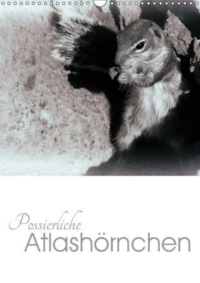 Possierliche Atlashörnchen (Wandkalender 2019 DIN A3 hoch), Lucy M. Laube