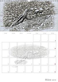 Possierliche Atlashörnchen (Wandkalender 2019 DIN A3 hoch) - Produktdetailbild 3
