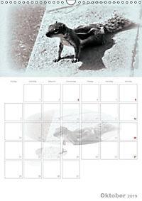 Possierliche Atlashörnchen (Wandkalender 2019 DIN A3 hoch) - Produktdetailbild 10