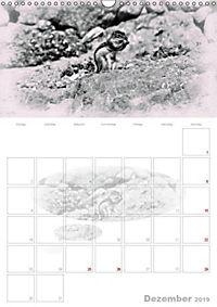 Possierliche Atlashörnchen (Wandkalender 2019 DIN A3 hoch) - Produktdetailbild 12