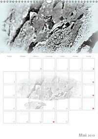 Possierliche Atlashörnchen (Wandkalender 2019 DIN A3 hoch) - Produktdetailbild 5