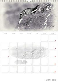 Possierliche Atlashörnchen (Wandkalender 2019 DIN A3 hoch) - Produktdetailbild 6