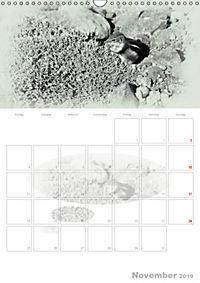 Possierliche Atlashörnchen (Wandkalender 2019 DIN A3 hoch) - Produktdetailbild 11