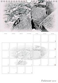 Possierliche Atlashörnchen (Wandkalender 2019 DIN A4 hoch) - Produktdetailbild 2