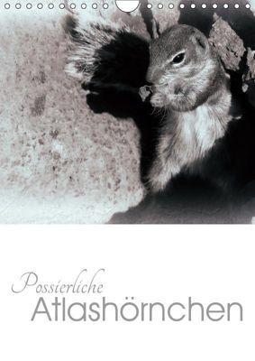 Possierliche Atlashörnchen (Wandkalender 2019 DIN A4 hoch), Lucy M. Laube