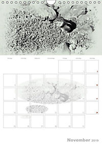 Possierliche Atlashörnchen (Wandkalender 2019 DIN A4 hoch) - Produktdetailbild 11