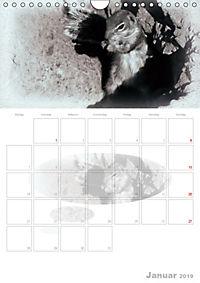 Possierliche Atlashörnchen (Wandkalender 2019 DIN A4 hoch) - Produktdetailbild 1