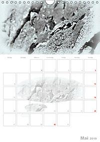 Possierliche Atlashörnchen (Wandkalender 2019 DIN A4 hoch) - Produktdetailbild 5
