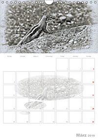Possierliche Atlashörnchen (Wandkalender 2019 DIN A4 hoch) - Produktdetailbild 3