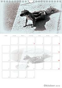 Possierliche Atlashörnchen (Wandkalender 2019 DIN A4 hoch) - Produktdetailbild 10