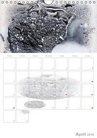 Possierliche Atlashörnchen (Wandkalender 2019 DIN A4 hoch) - Produktdetailbild 4