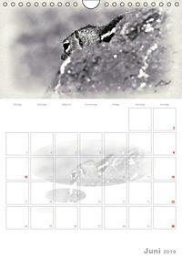 Possierliche Atlashörnchen (Wandkalender 2019 DIN A4 hoch) - Produktdetailbild 6
