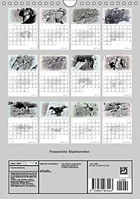 Possierliche Atlashörnchen (Wandkalender 2019 DIN A4 hoch) - Produktdetailbild 13