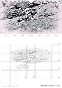 Possierliche Atlashörnchen (Wandkalender 2019 DIN A4 hoch) - Produktdetailbild 12